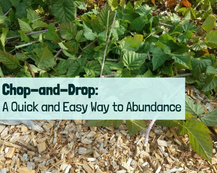 Chop-and-Drop: Quick and easy way to abundance