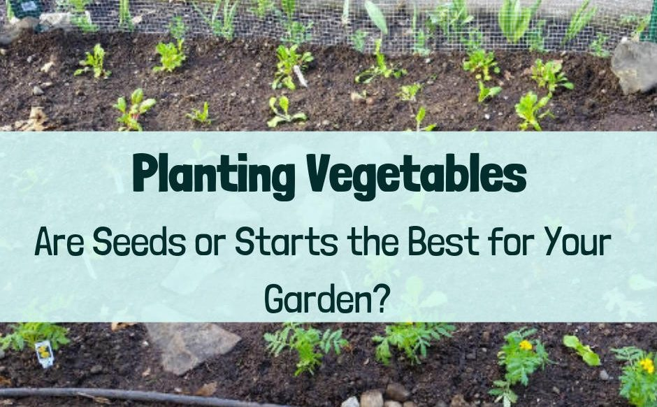 Seeds or transplants? Which is better for your garden?