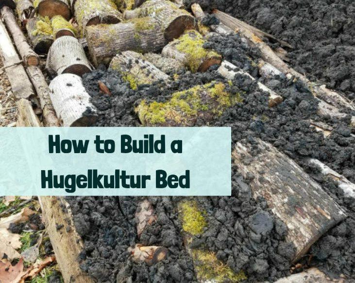Build a hugelkultur bed