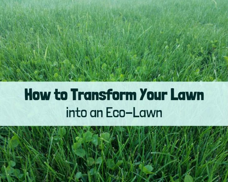 Transform your lawn into an eco-lawn