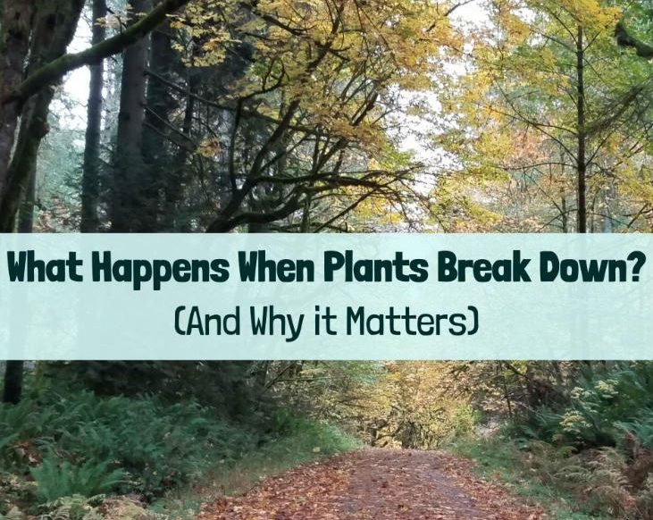 When plants break down in the forest, nature takes care of it.
