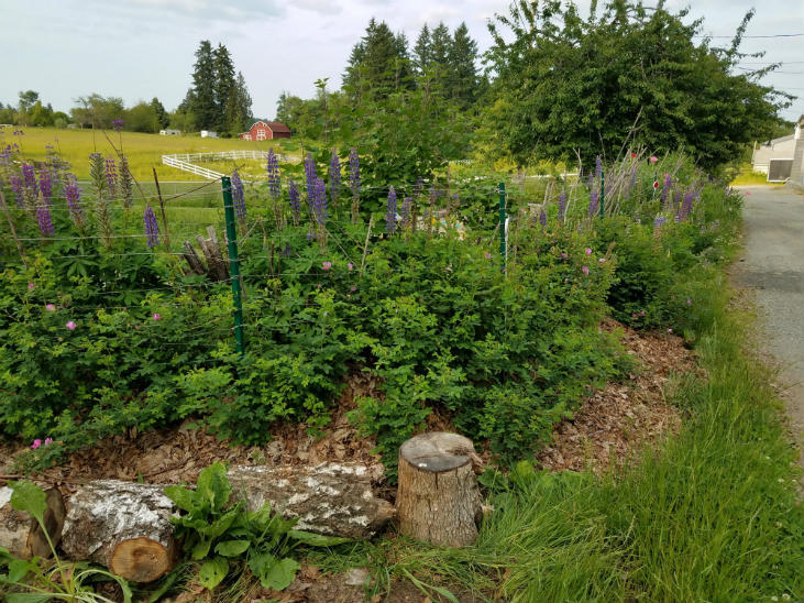 Store water on your wild homestead by building soil