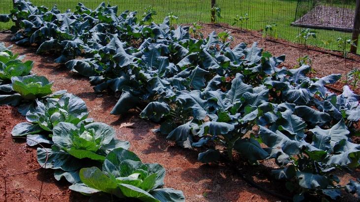 Control garden pests by not planting monoculture rows of vegetables