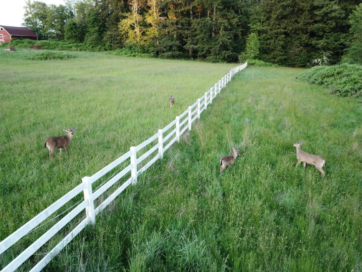 keeping deer out supports wildlife