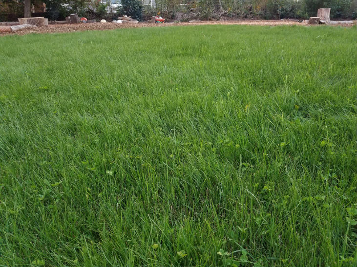 Transform your lawn into an eco-lawn to help the environment