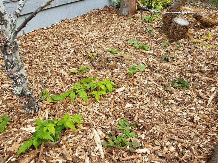 plant perennials in the fall to give your plants a boost