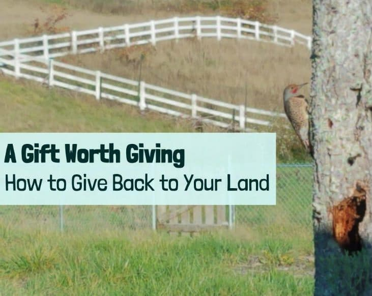 Time to give back to your land