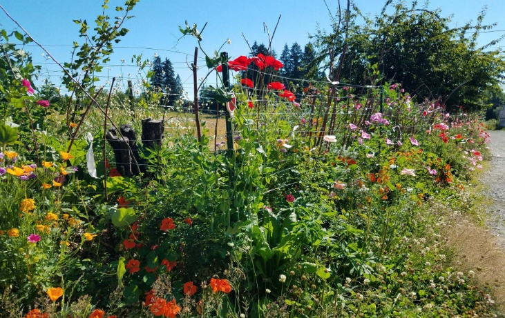 Control garden pests by planting perennials.