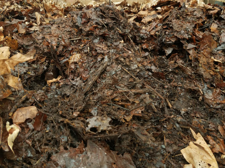 leaf mold is easy to make