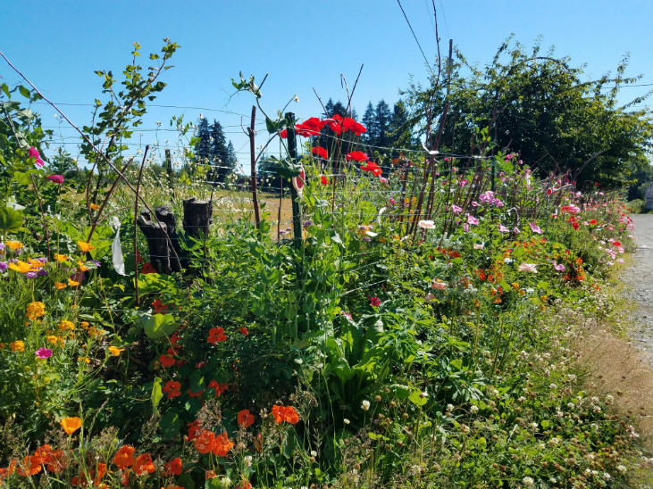Perennial greens can be mixed in your garden