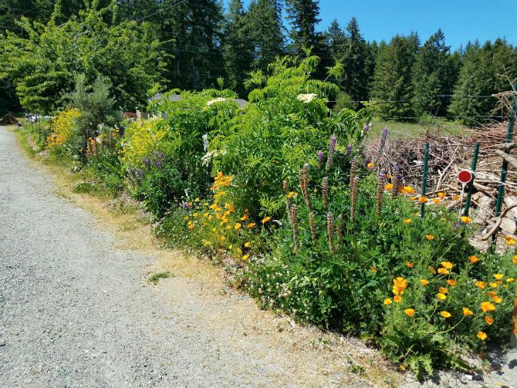 Native plants increase biodiversity