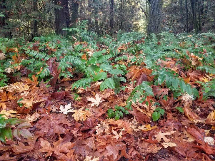Fall leaves make great mulch
