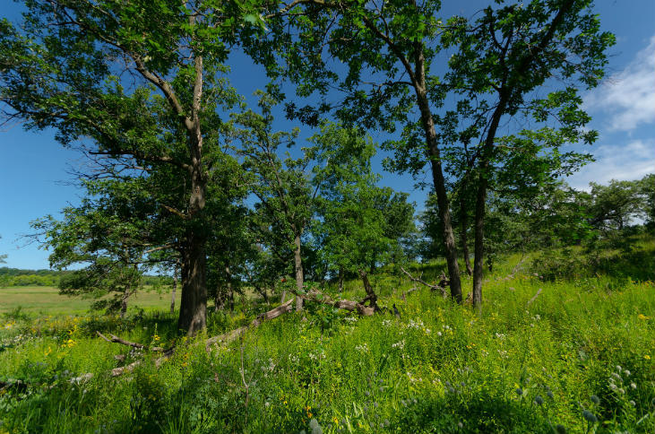 Oak savanna type of food forest