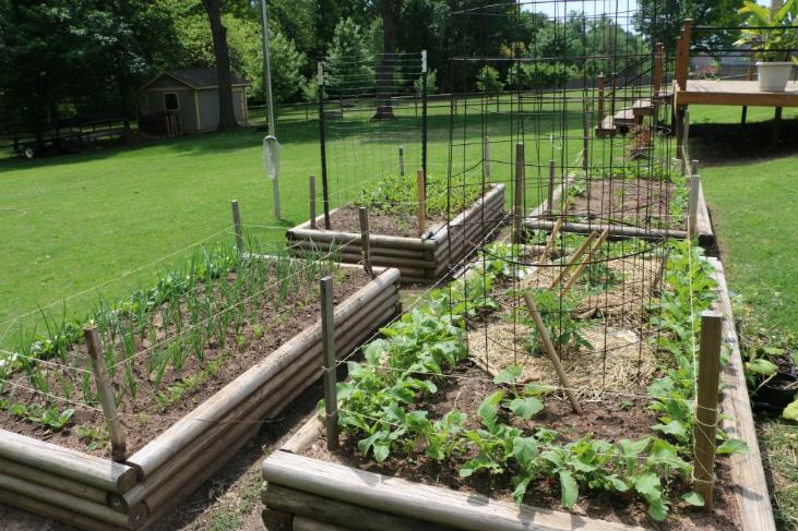 Control garden pests by avoiding the Oasis Garden