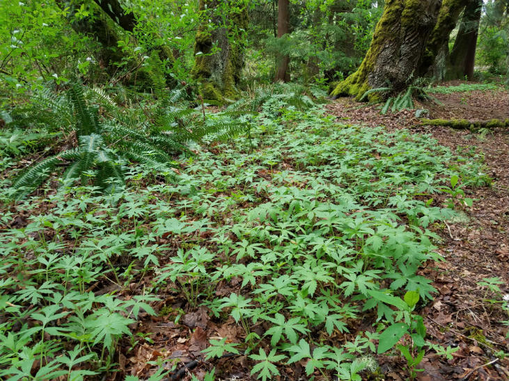Start looking for native wild vegetables in your area