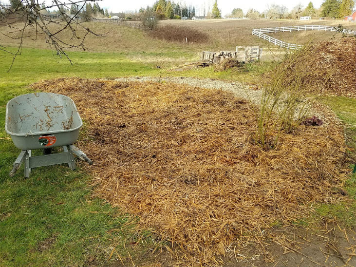 Straw or hay can be a great type of mulch