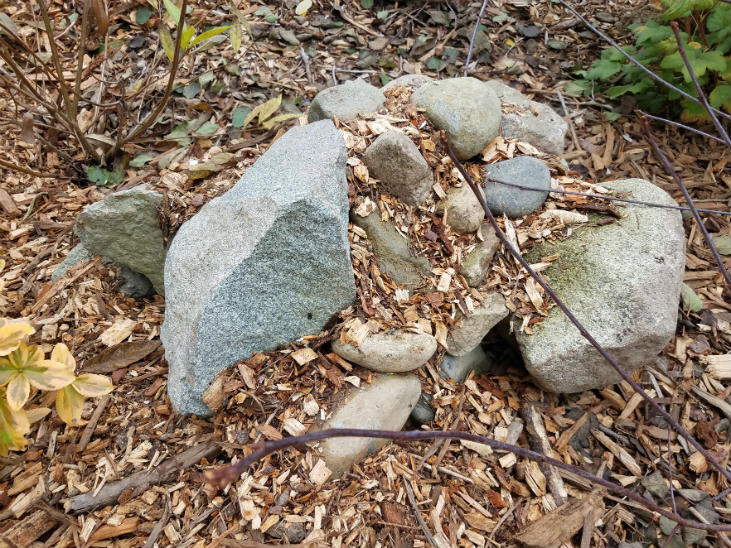 Rock mulch can be used as a type of mulch