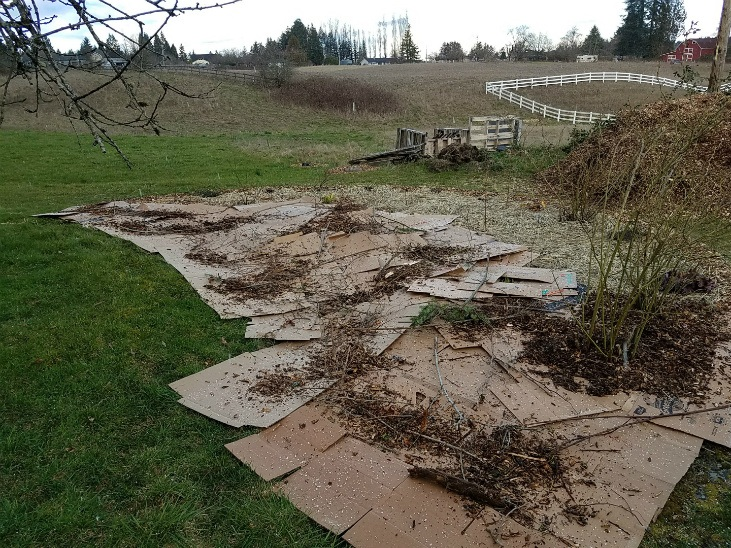 Preparing land for planting with sheet mulching