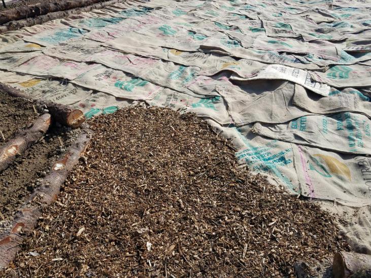 Sheet mulching with burlap bags