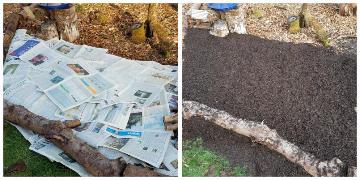 Sheet mulching with newspaper