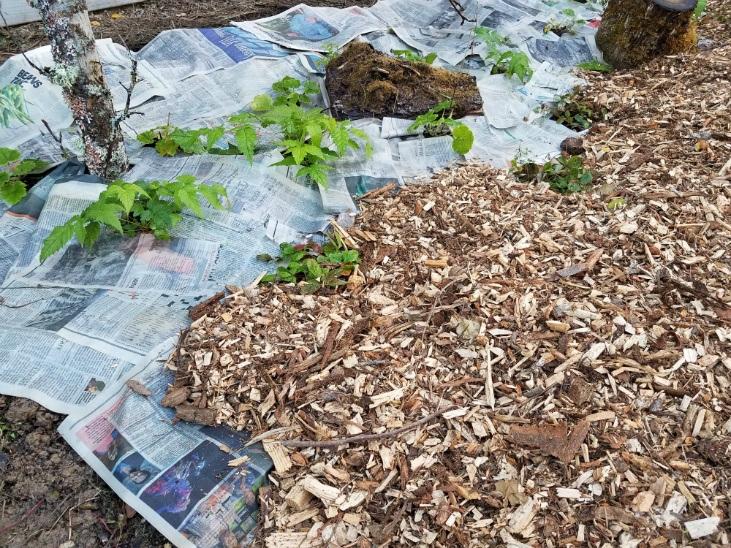 Preparing land for planting using paper for sheet mulching