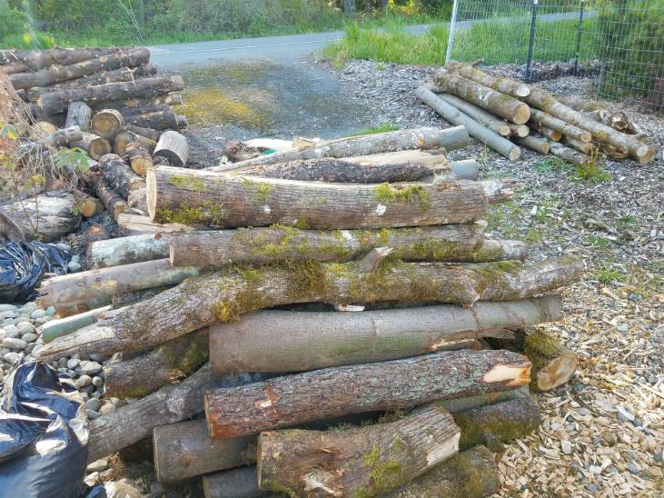 Use woody debris