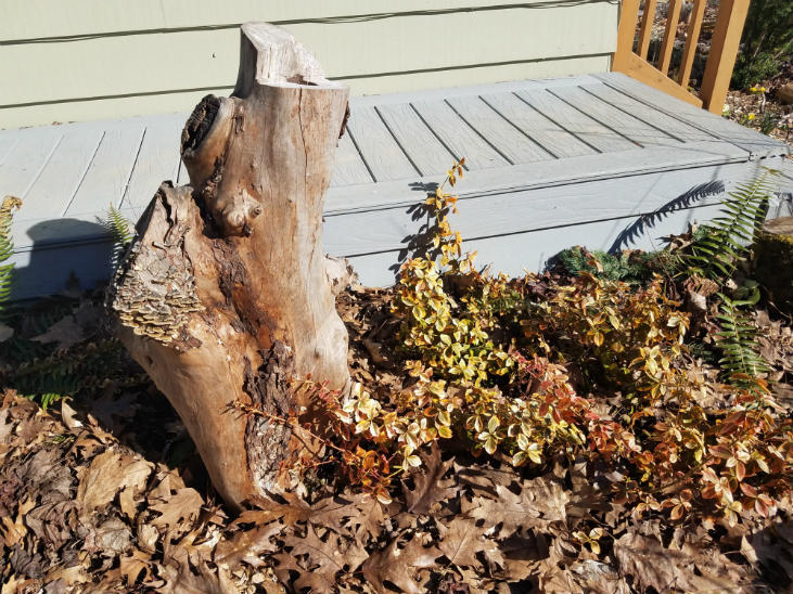 Woody debris is an important food forest layer
