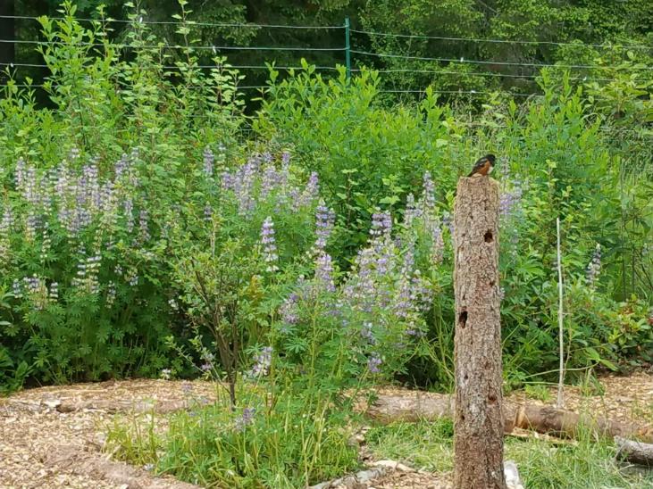Use woody debris to create wildlife habitat