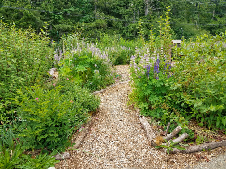 Use wood debris for trail borders