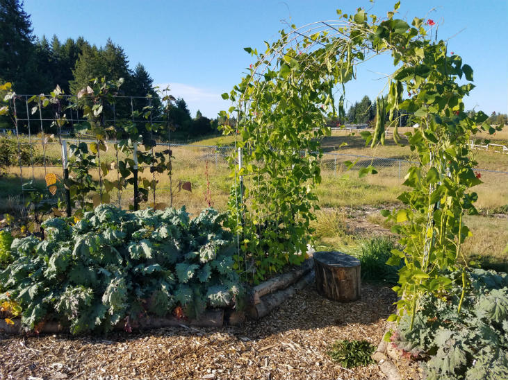 Get started with polyculture in your garden by planting tall vegetables on the northside