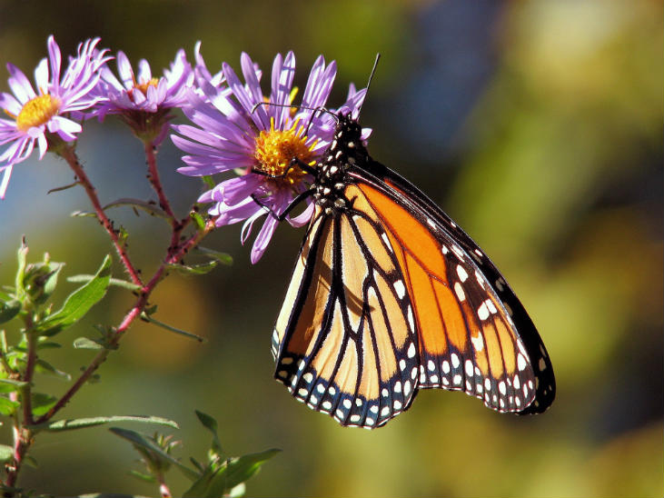 Supporting insects is why native plants matter