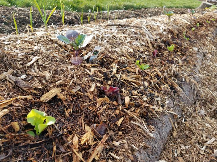As a beginner gardener make sure you mulch your garden.
