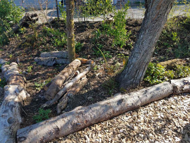 Grow waterleafs in the shade