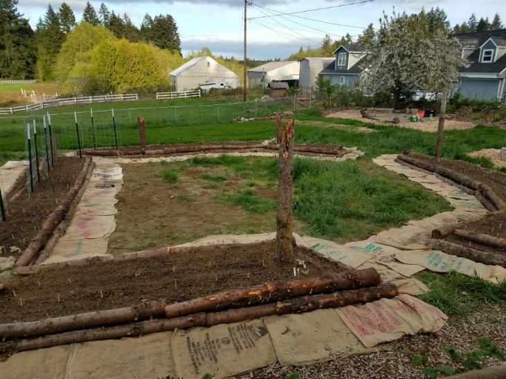 Transforming my lawn into a kitchen garden