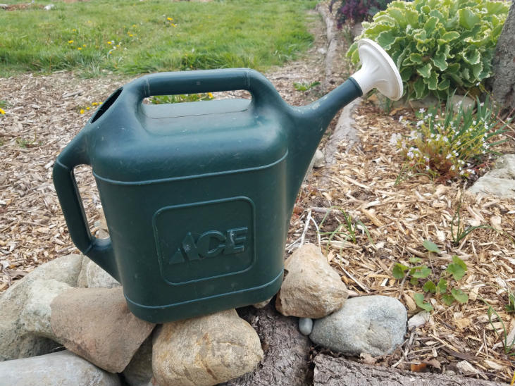 Avoid the gardening mistake of watering too much