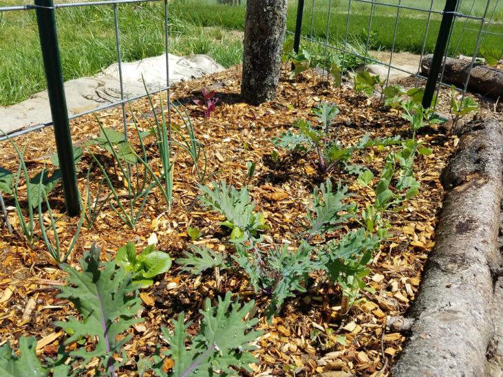 Don't forget to mulch your garden!