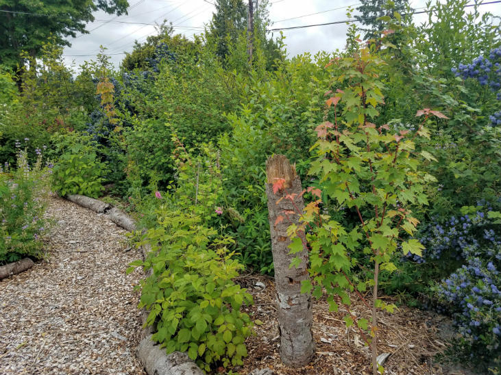 Shrub layer is an important part of a food forest