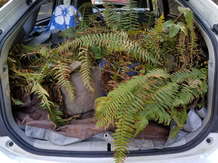 You can fit a lot of salvaged plants in your car