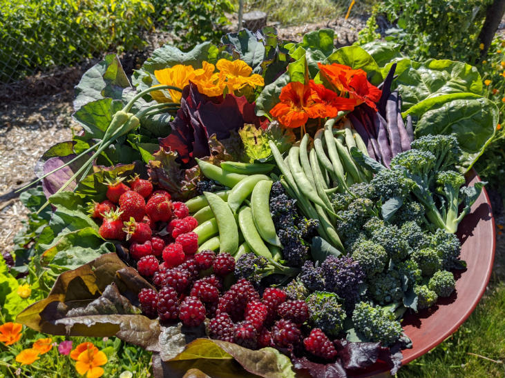 With appropriate addition of nitrogen to your garden soil you can have abundant harvests