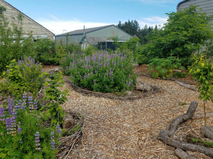 Moderate climate extremes by building soil and planting perennials