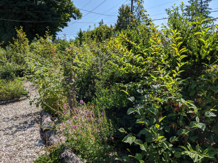 When starting a hedgerow think about what its purpose is