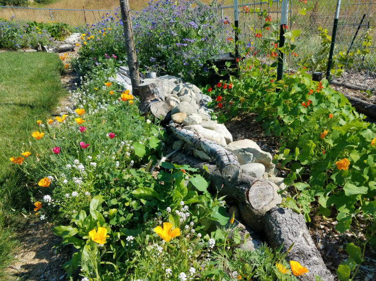 When growing a mini-meadow don't forget to add habitat features