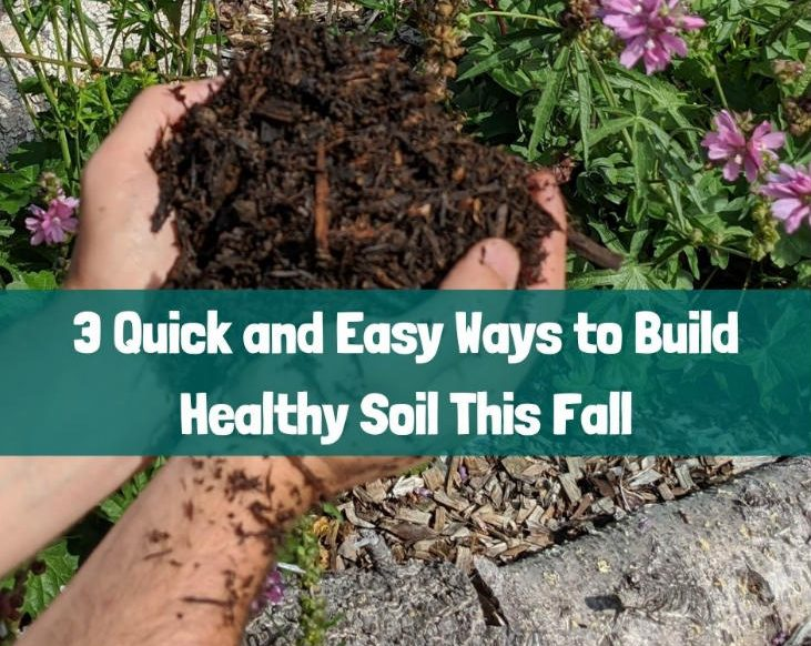 Build healthy soil this fall