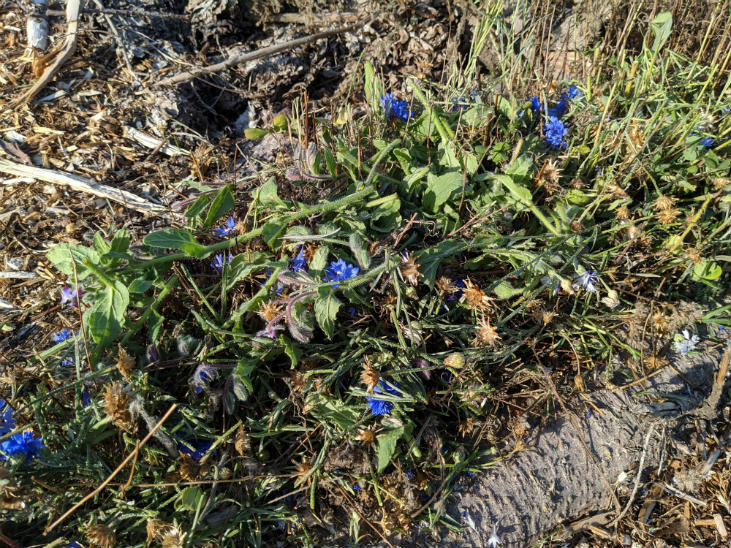 Build healthy soil this fall by chop-and-dropping spent flowers