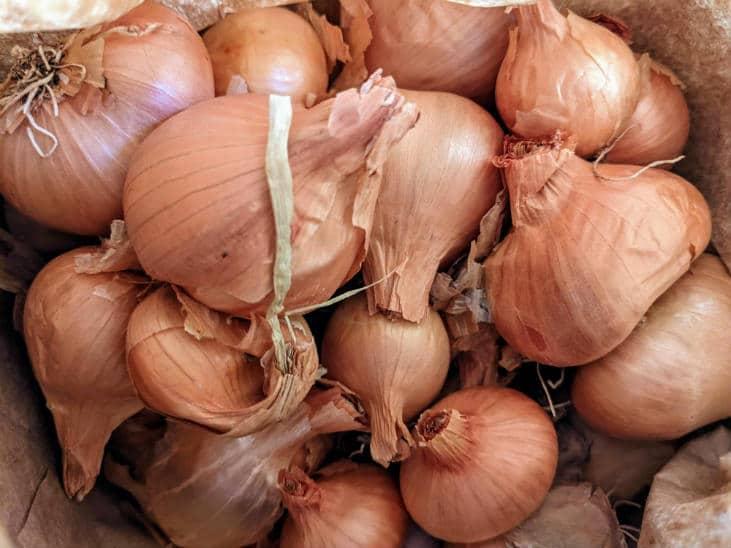 Try growing perennial onions like potato onions