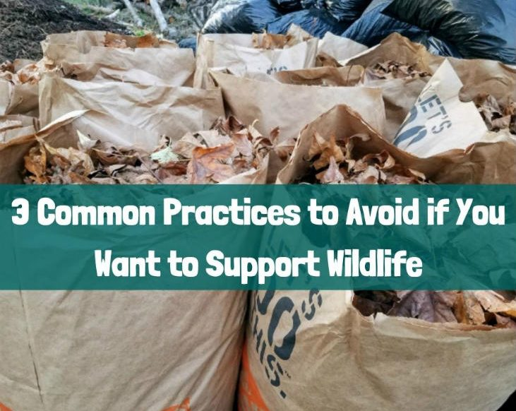 3 Common Practices to Avoid if You Want to Support Wildlife