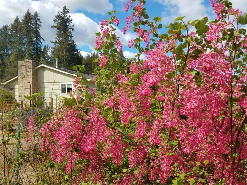 Here's whey native plants matter