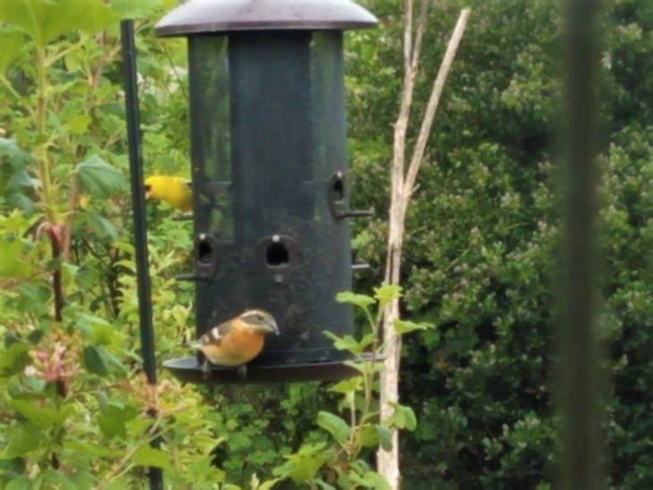 Bird feeders are a great way to attract birds