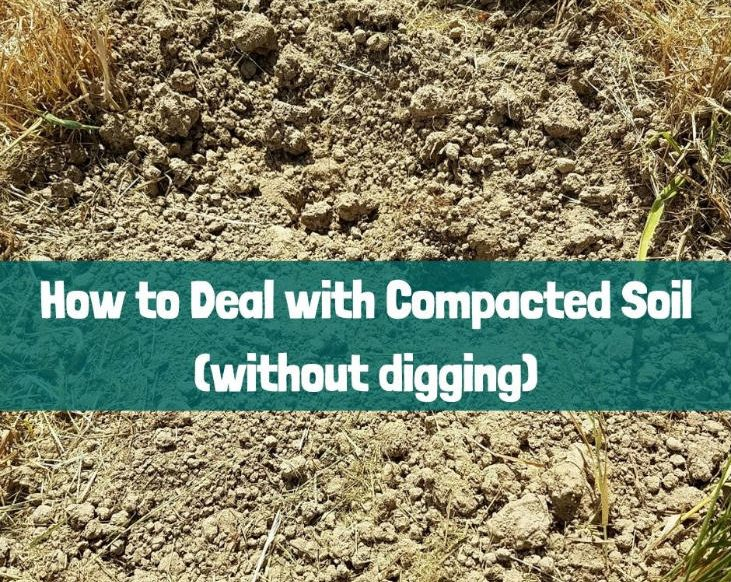 Deal with compacted soil without digging