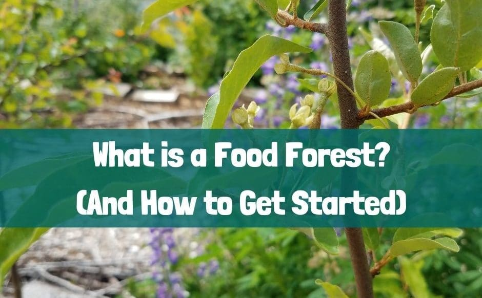 What is a food forest featured image